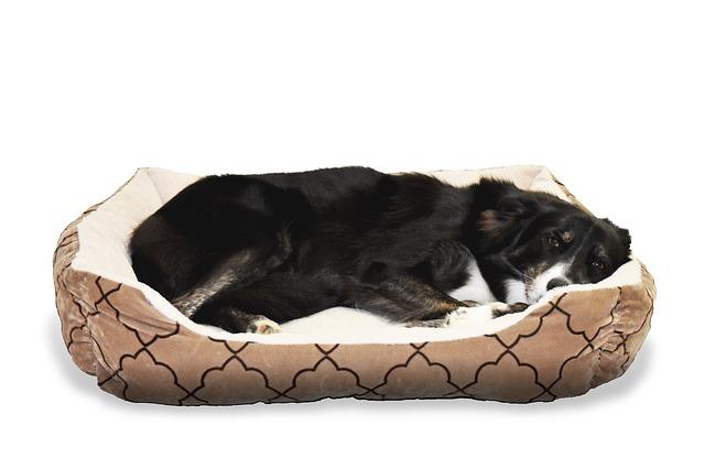 Zederngefüllte Hundebetten – So vertreiben Sie Flöhe und Gerüche